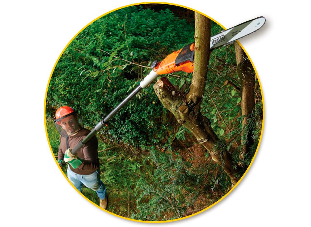 Кронирование дерева.